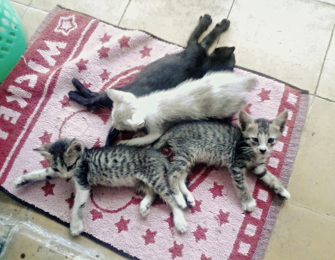 Sweet Children of Miya Cat
